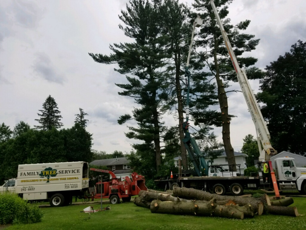 Need Emergency Tree Removal After a Severe Storm?